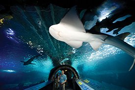 Newport Aquarium tunnel