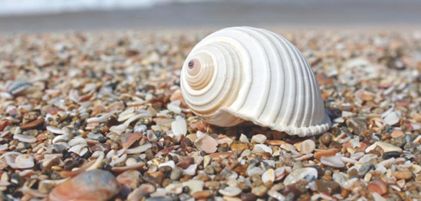 Shell on a beach