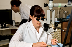 medical student working in the lab