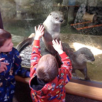 children petting otters